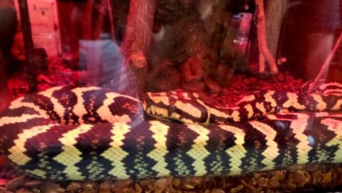 Snake Panola Mountain State Park 3