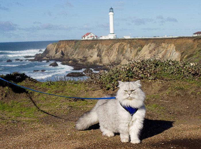 Este Es Gandalf, Un Gato Viajero Que Tiene Mejores Vacaciones Que Tú