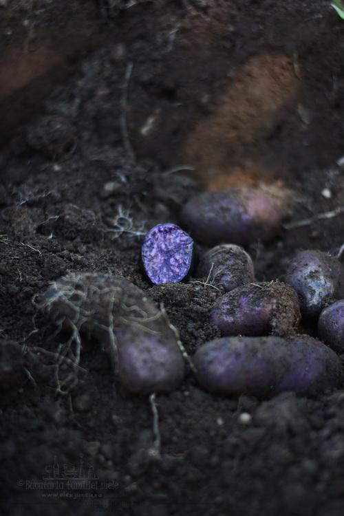 cartof mov
