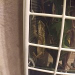 まさかの脱走劇!驚異のキノボリトカゲ