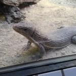 東山動物園で教わる動物飼育02
