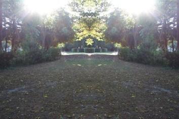 mirrored-image