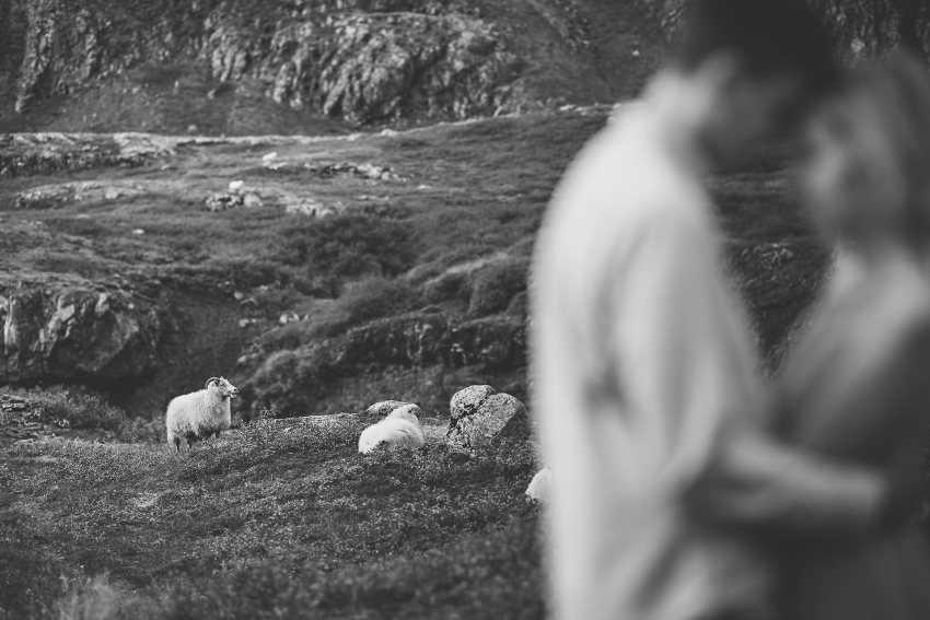 Icelandic sheep behind couple