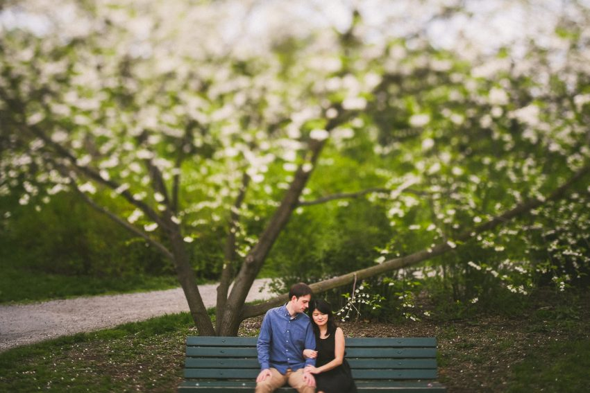 Arnold Arboretum blossoming engagement