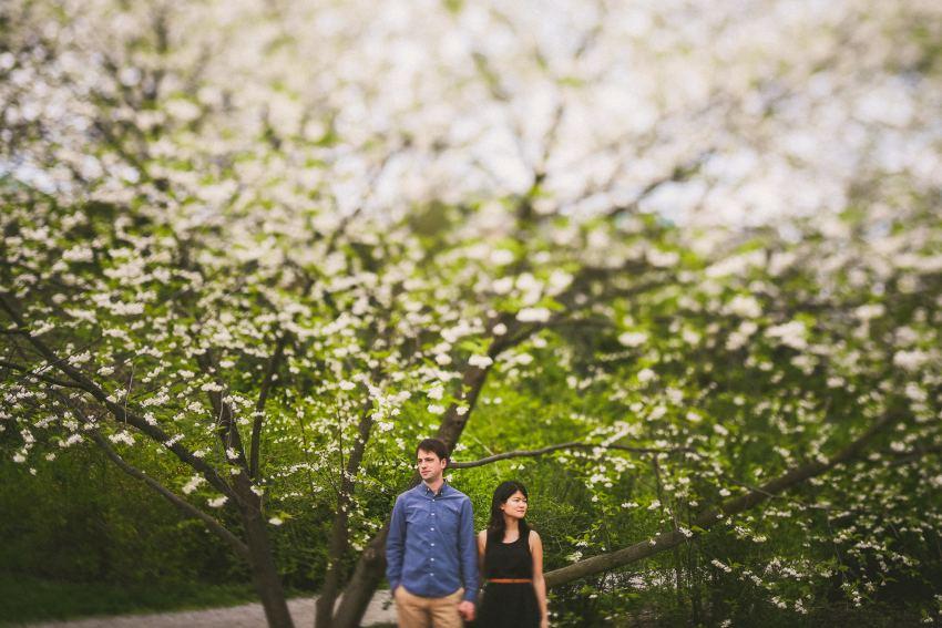 Arnold Arboretum flowers