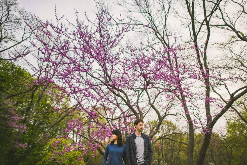 Arnold Arboretum sunrise engagement pictures