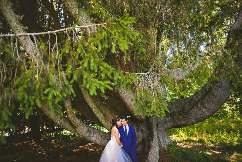 Tanglewood octopus tree wedding photo