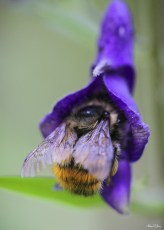 alexpullenwildflowers-3860