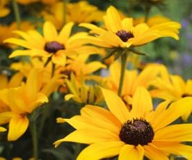 alexpullenwildflowers-4193