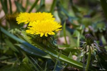 alexpullenwildflowers-9575
