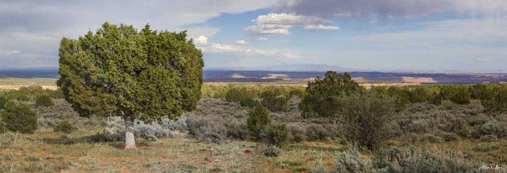 The Canyons of Cedar Mesa