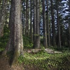 Canon Beach Oregon Alex Pullen Photography-1186