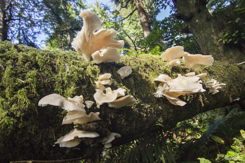Alex Pullen Telluride Mushroom Festival photography-1223