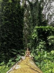 Lyon Arboretum Rainforest