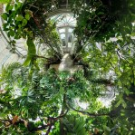 Green house world