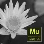виджеты_мюс_widgets_muse_mini