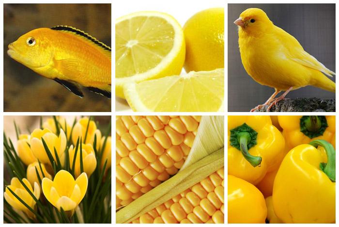 Жёлтый_цвет_животные_и растения_1