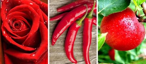Растения_красного_цвета