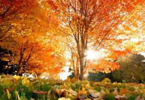осень дерево листья
