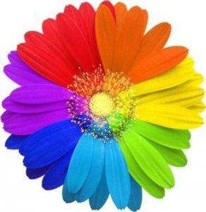 Разноцветная ромашка