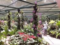 Inside the orchidarium. Внутри оранжереи.