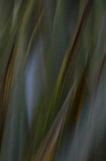 green-leaf-2-icm