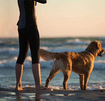 Image result for dogs Healthy Lifestyle