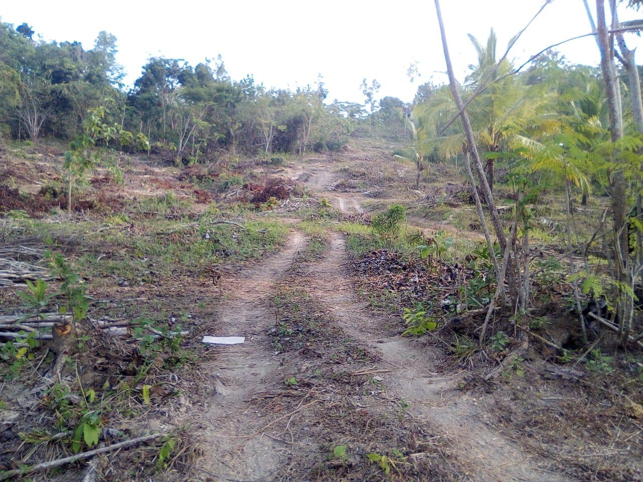 Persiapan Lahan Taman Darussalam Jogjakarta