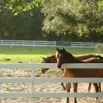 Horse Properties in the Lake Norman Area