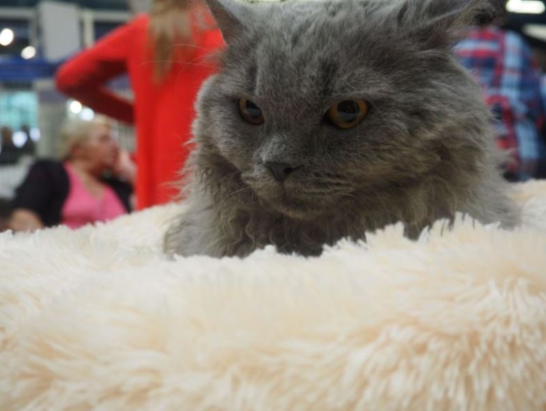 Chat salon Animal Expo