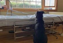 Photo of La conmovedora foto de un perro esperando a su dueño fallecido