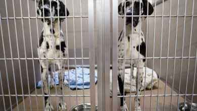 Photo of Condenan envenenamiento masivo de perros en refugios de Ecuador