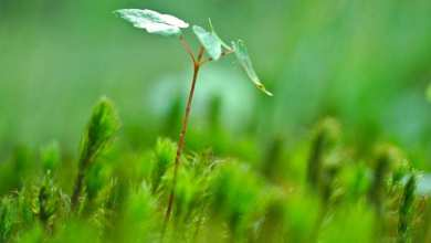 Photo of Plantar un billón de árboles, la mejor manera de combatir cambio climático