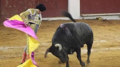 Photo of López Obrador no descarta consulta sobre corridas de toros