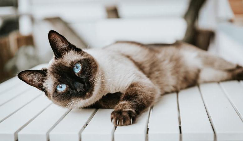Photo of Arañazo de su gato la dejó en coma