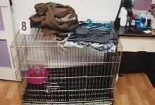 Photo of Muere niño en jaula de gato y torturado con agua caliente