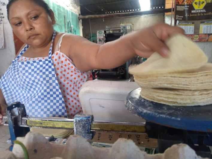 Ley contra maíz híbrido encarecería precio de la tortilla
