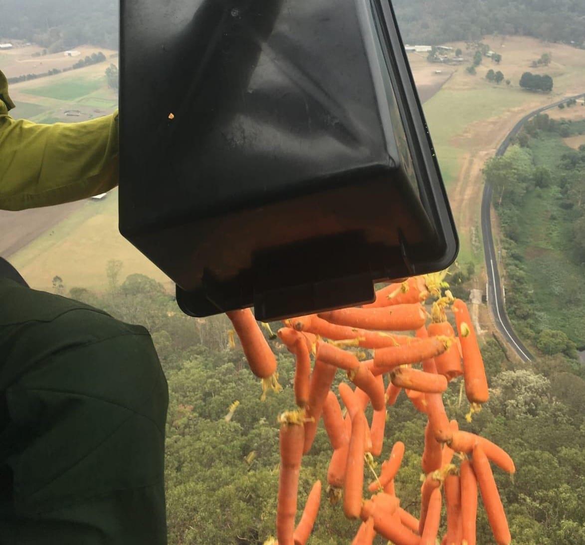 Lanzan verduras desde helicópteros para animales por incendios en Australia