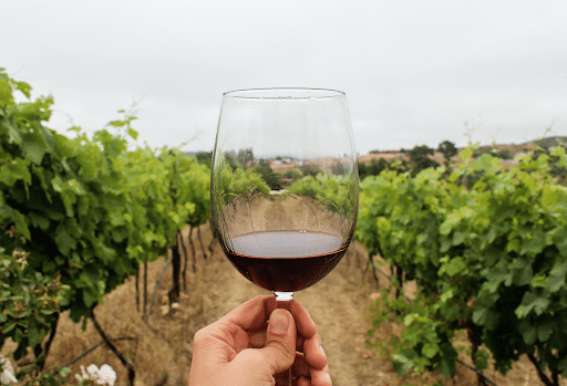 Cambio climático amenaza la producción de vinos