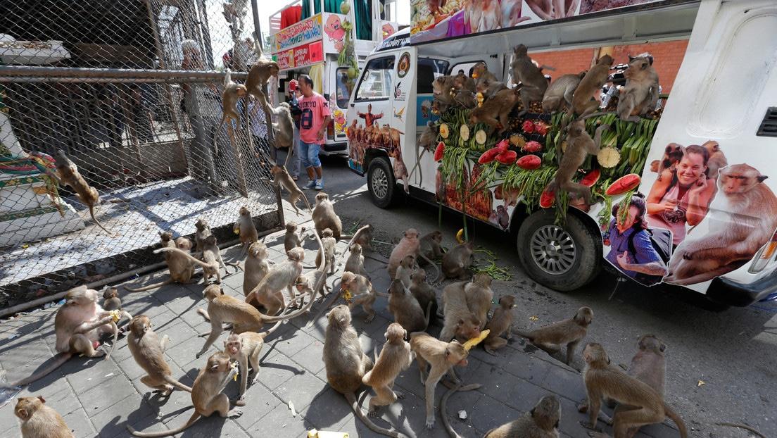 Monos crean caos peleando por comida tras crisis de coronavirus en Tailandia