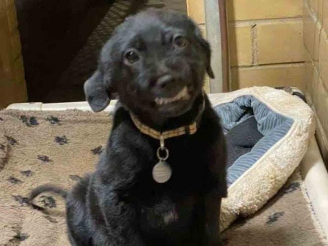 Perrito sonríe para que lo adopten y nadie lo quiere