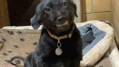 Photo of Perrito sonríe para que lo adopten y nadie lo quiere