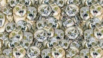 Photo of Hay un gato entre los búhos