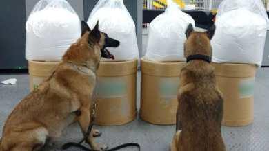 Photo of Decomisan varios kilos de fenacetina en Aeropuerto