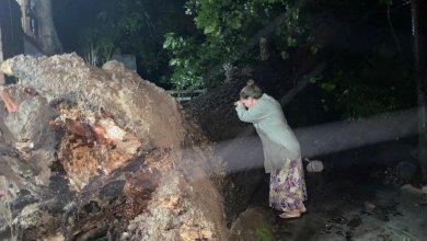 Photo of Hanna arrancó árbol y mujer llora desconsolada