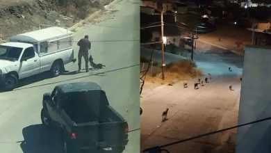 Photo of Capturan parte de la jauría asesina en Tijuana