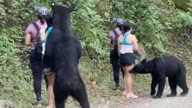 Photo of Esta es la selfie que tomó la chica del oso