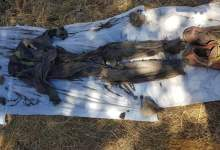 Photo of Localizan cuatro cadáveres en fosa clandestina de Tecate