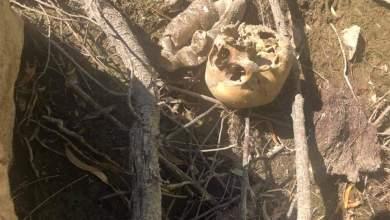 Photo of Localizan más restos humanos ahora en Tecate