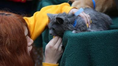adopcion-de-mascotas-reduce-fauna-callejera-en-colonias-arturo-gonzalez